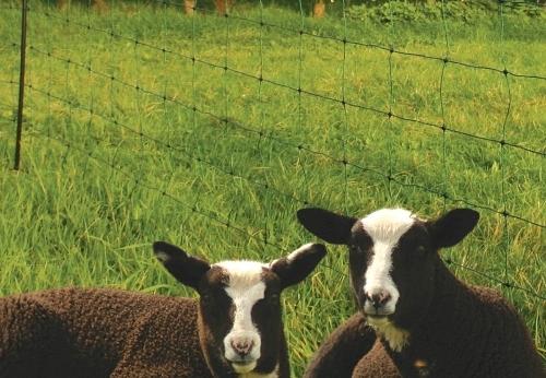 Gard plasa ovine - Gard Electric - Accesorii - Generatoare